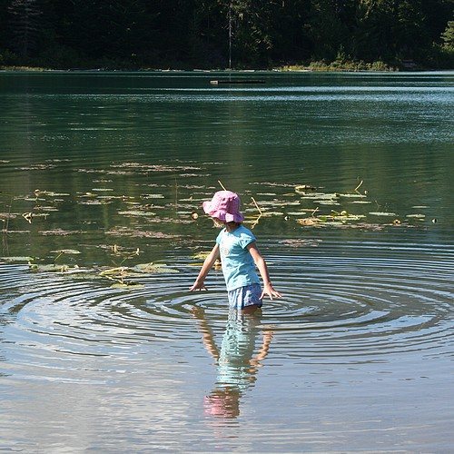 Looking for minnows