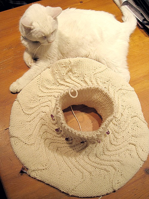 Cat disdain