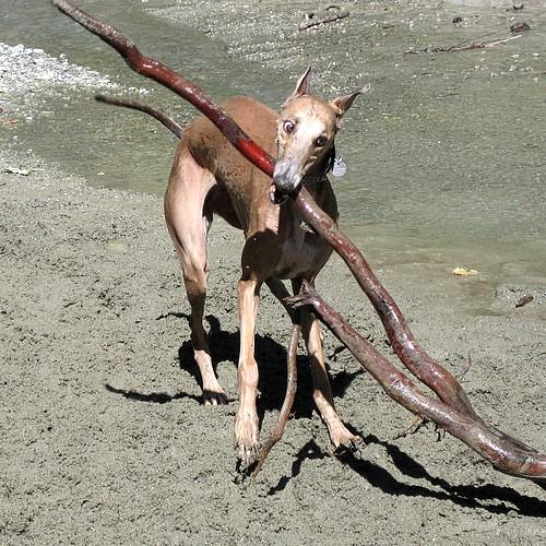 Stick2