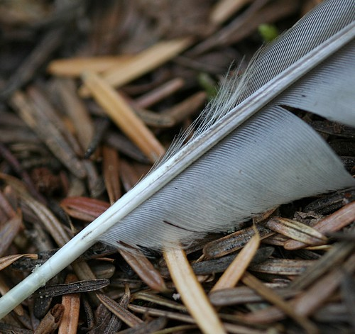 Feather on forest