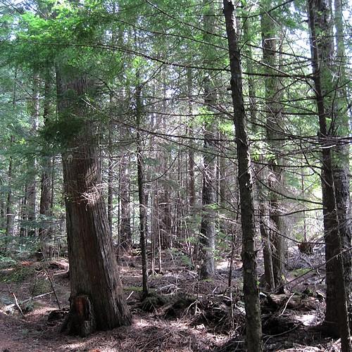 Fragrant forest