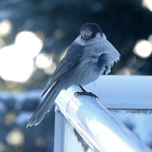 Bird in wind