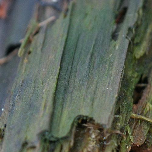 Winterbark greens