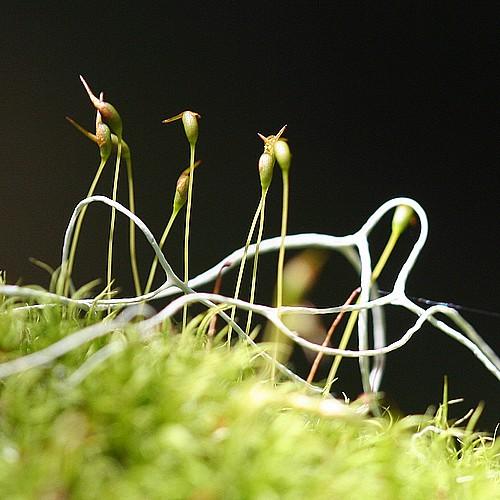 Mossy still life
