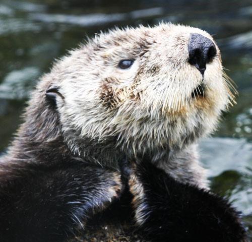 Otter schemey fingers