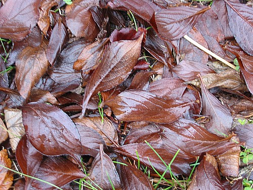 Soggy_leaves