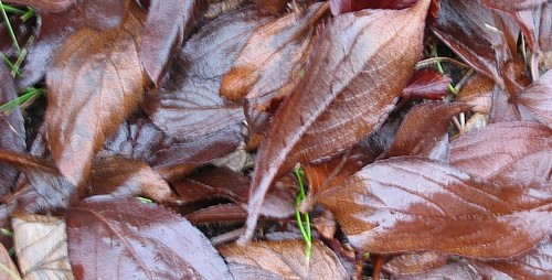 Soggy_leaves2