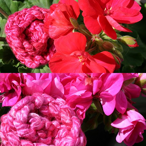 With_geraniums