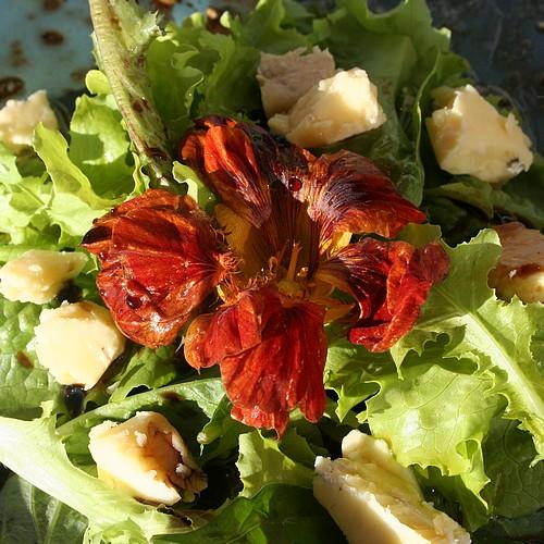 Salad_with_stilton