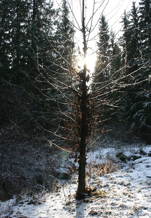 Radiant_tree_2