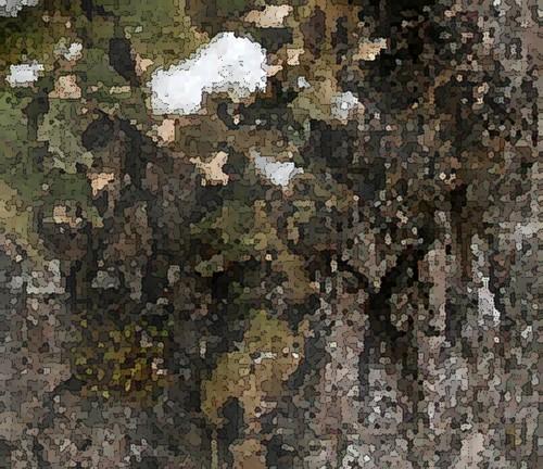Lichens_pixellated